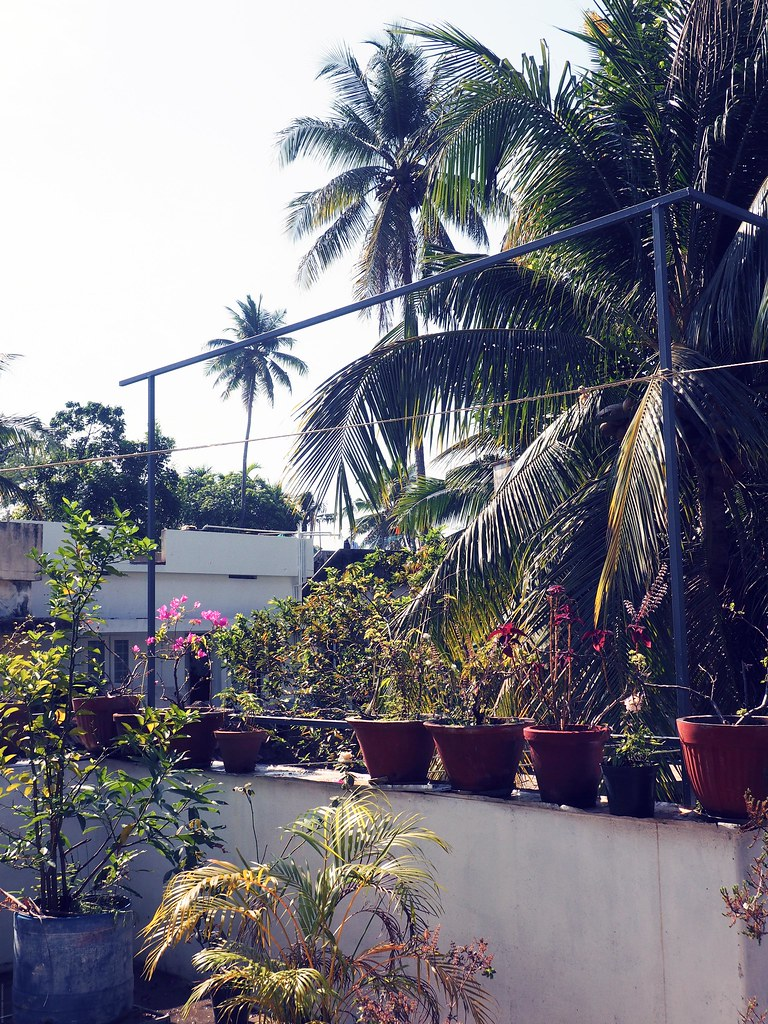 Kochi Cochin Palm Trees House Views_effected