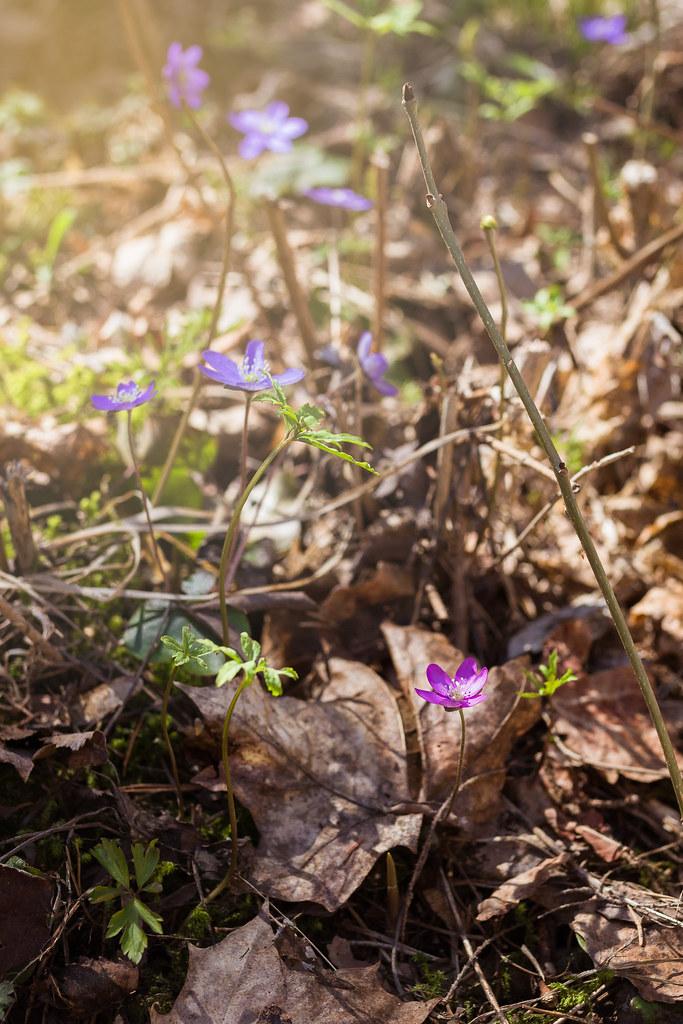 Digitrail-hanke / Aulanko kevät