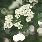 20180519-191843 - Spring Flower Bokeh