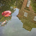 in the pond | acorn bank | temple sowerby