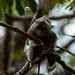Cute marmoset