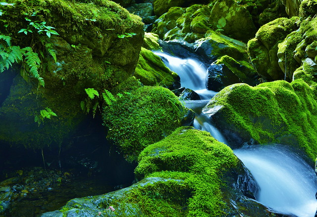 Moss green and flow of water