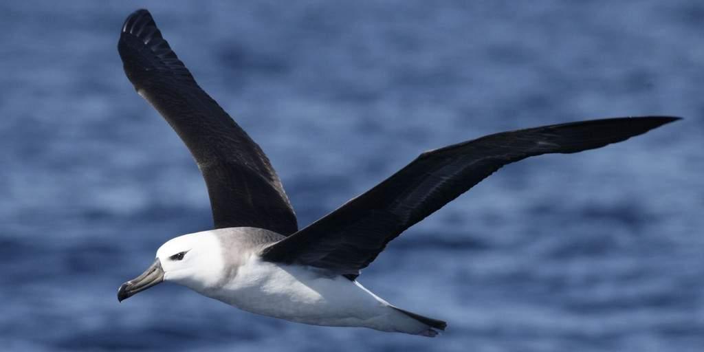 Surveiller les océans en utilisant un albatross robot