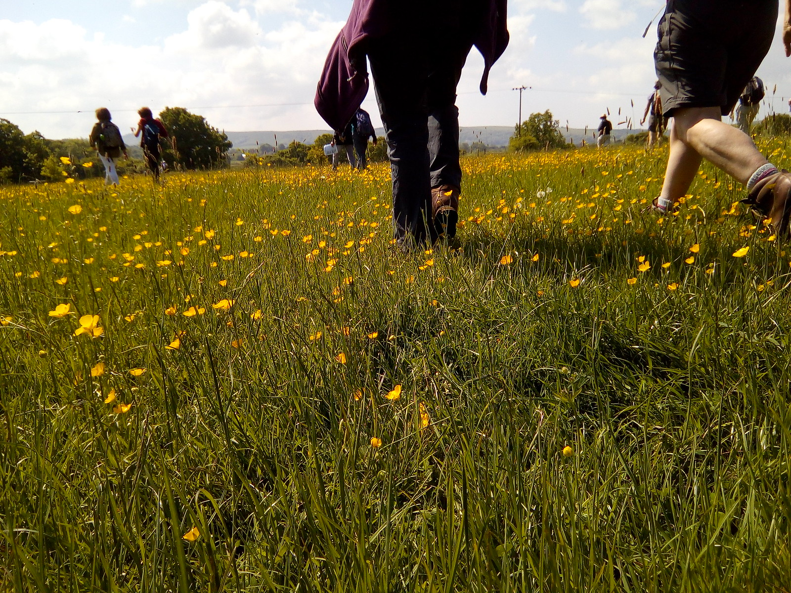Trampling buttercups Mid-meadow course correction