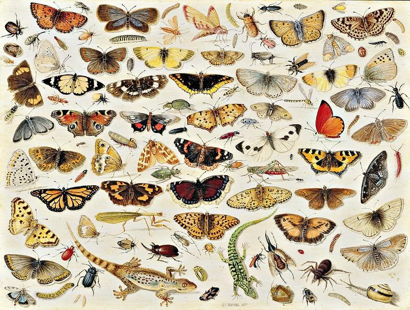 Jan van Kessel the Elder - Butterflies (1657)
