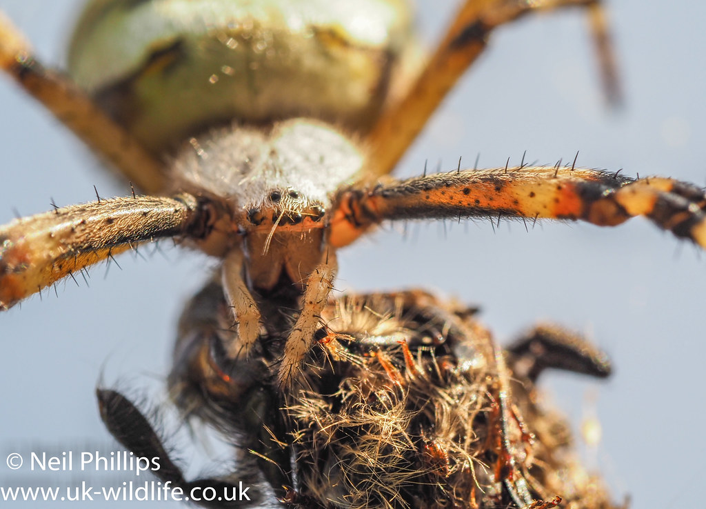 Wasp spider stack
