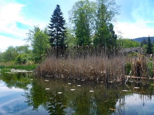 Lake Samish Paddling-73