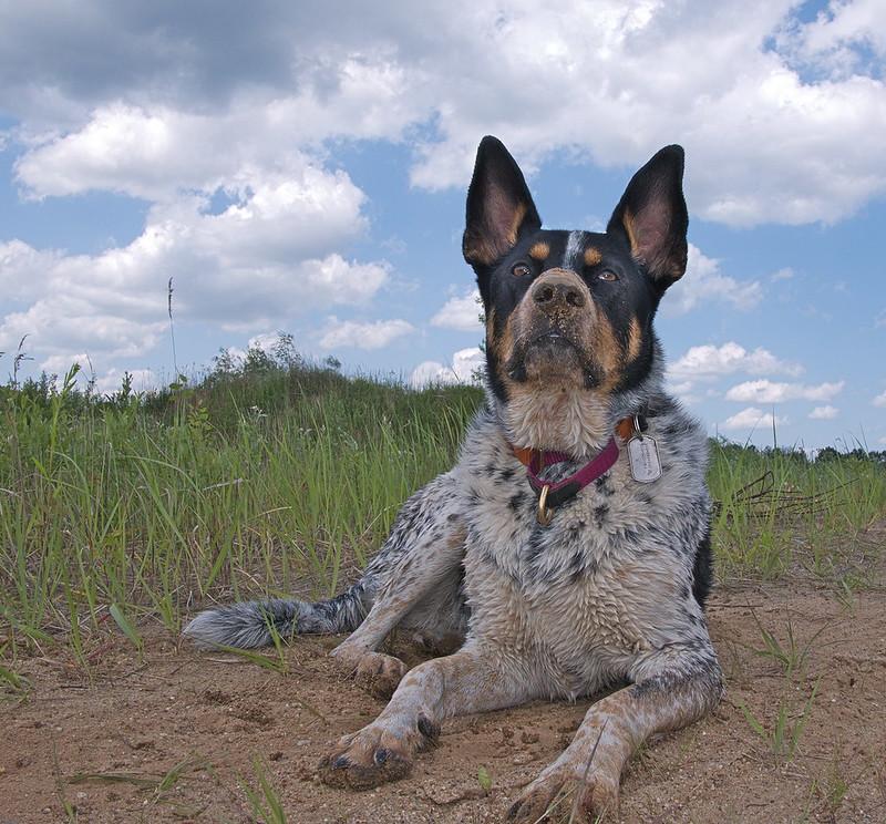 podwyższenie kar wykroczenia pies