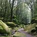 The forest of Cucuruzzu by Götz_
