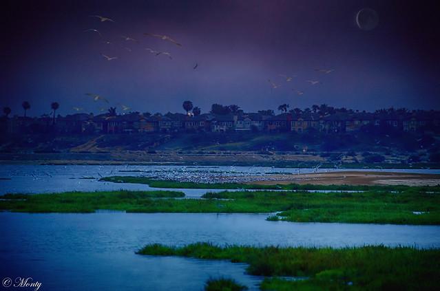 Bird Sanctuary Sunset Beach, California