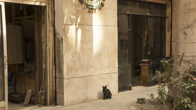 The black cat at a shop in Cairo's Sherifeen Street