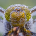 Dragonfly eyes covered by dewdrops by Kutub Uddin...