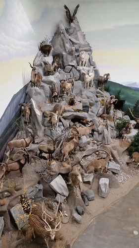 Mountain of Wildlife