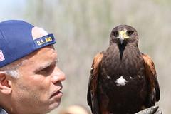 Eliot and Harris's hawk