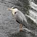 Heron River Dee 3