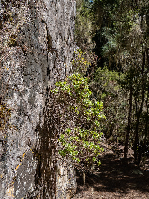 Teneriffa - Pflanzen März/April 2018