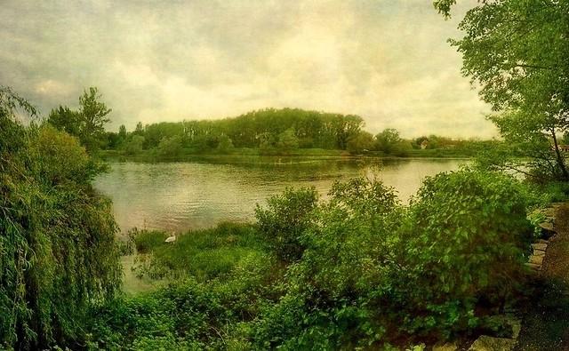 Le Rhin à Sasbach côté allemand