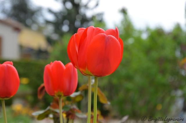 Reines aux jardins de printemps