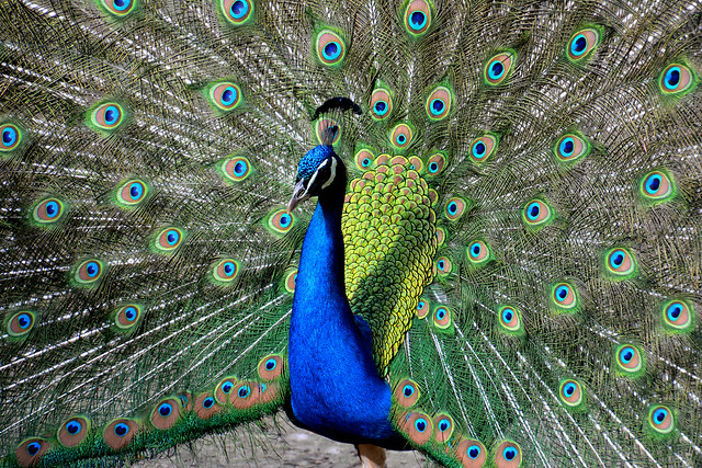 A colourful show-off