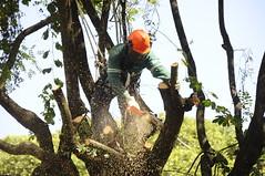 Podas e supressões de árvores - Praça da Liberdade