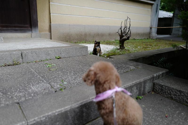 Leica Q雑司ヶ谷法明寺山門の三毛猫とうちの小春さん