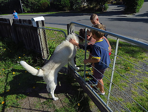 <p>Licky greets passersby</p>