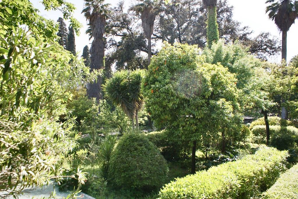 Palmiers et orangers dans le jardin du musée Batha à Fès.