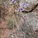 Delicate Desert Flower