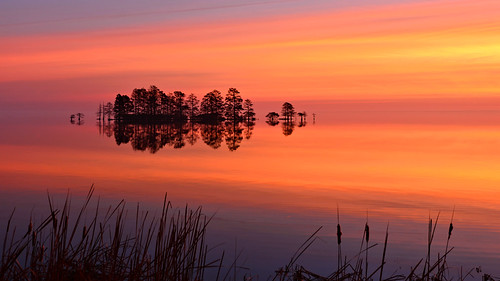 lakemattamuskeet northcarolina nationalwildliferefuge nikon landscape sunrise morning reflections cypress beautiful water trees easterncarolina photobenedict mattamuskeet travel dawn serene sky nature winter downeast outeast outerbanks englehard newholland fairfield easternflyway light colorful causeway reflection calm lake