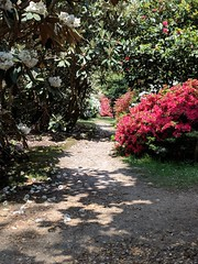 The path through the gardens