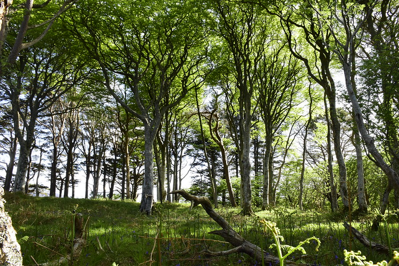 ulva forest