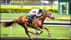 Cozze Kid - May 4, 2018 Maiden Special Weight @ Golden Gate Fields