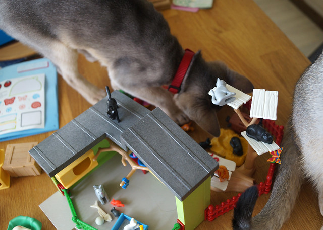 roryfreddyplaymobilcatsC05064