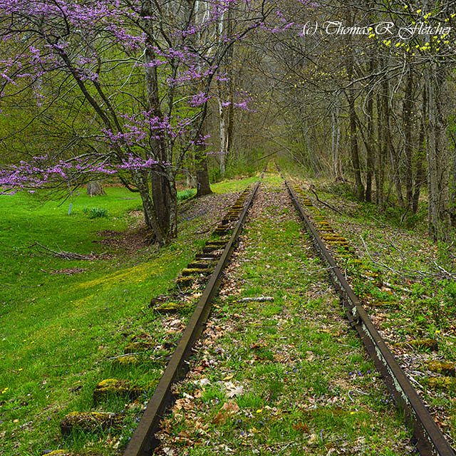 Redbud and Abandoned Railroad