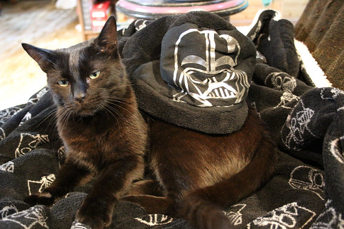 Loa cat and the Vader blanky