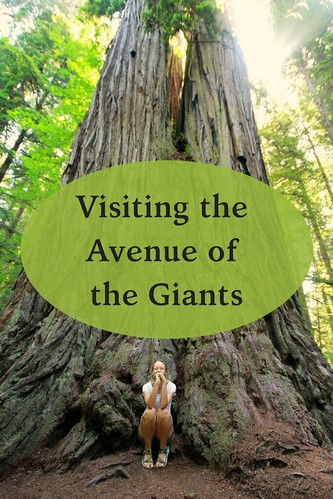 Visiting the Avenue of the Giants