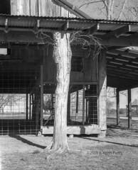 Tree Stump Barn Post