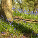 Bluebells at The Outwoods by John__Hull