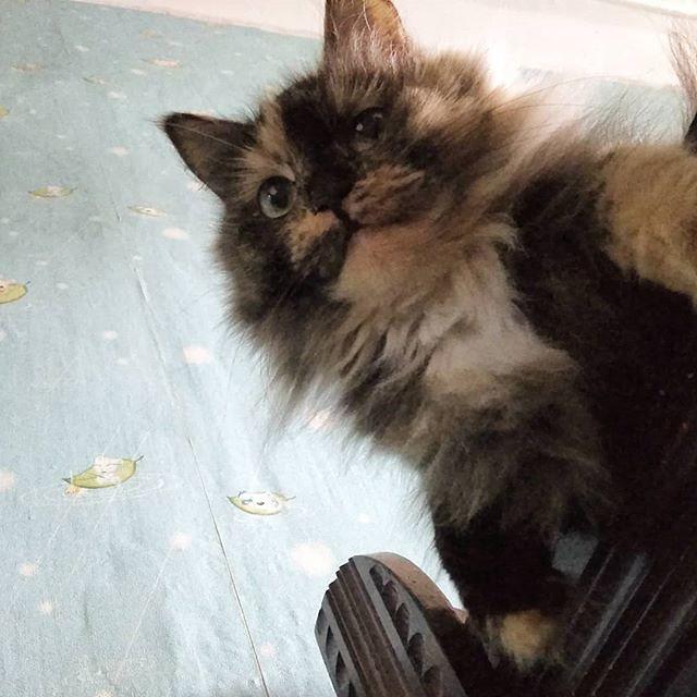 Кошка Соня™, в отличие от Феликса, существо гораздо более активное. Феликс наелся и где-то уже спит. А Соня вот пришла на соседнюю кровать и поглядывает оттуда сверху: а что это её человек там делает. А я Кошку Соню™ фотографирую :-)
