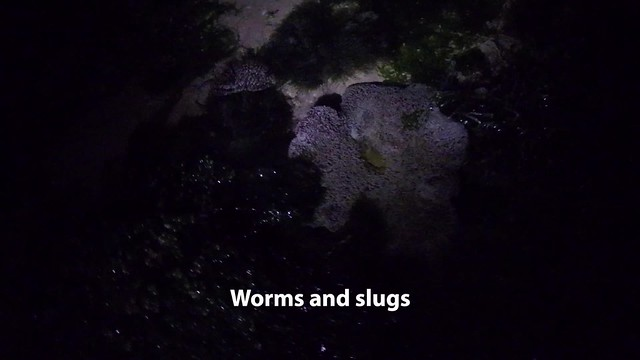 Some worms and slugs of Pulau Sekudu