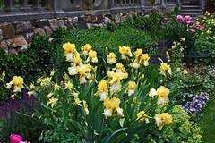 2009-WBYG034_Irises_in_the_Formal_Gardens