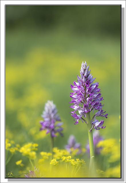 Orchidées (02)