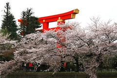 Visited Kyoto in spring