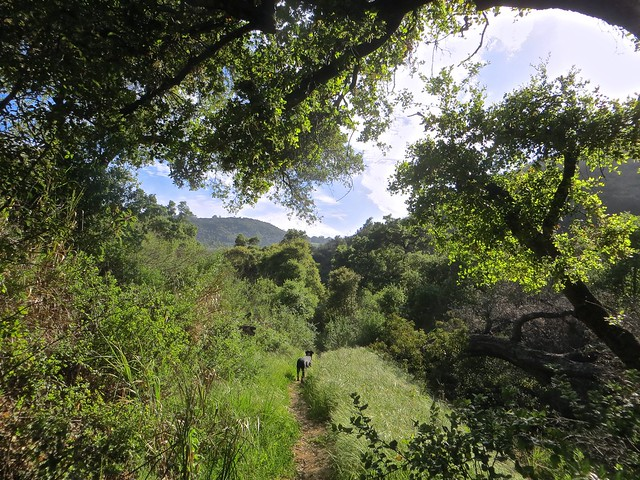 solstice canyon and spring green