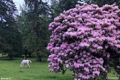 Rhododendron Season