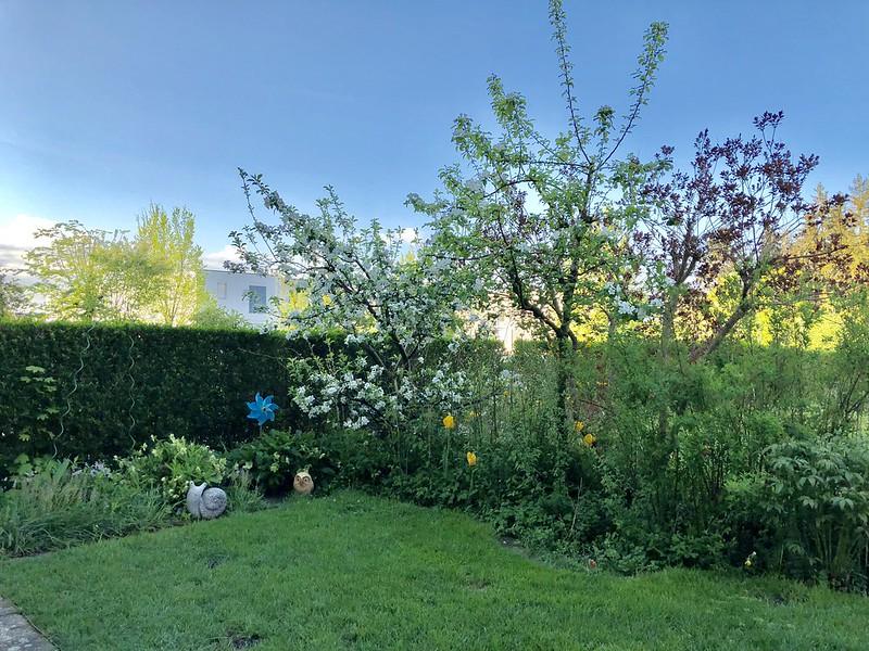 Back Garden Morning