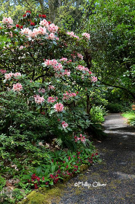 cecil-smith-garden-14