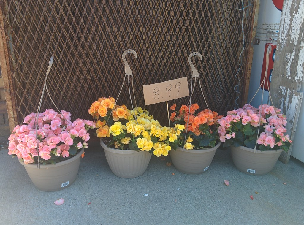 Flowers @ $C 8.99 #toronto #dovercourtvillage #flowers #dovercourtroad #hallamstreet #latergram
