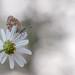 Le pouvoir des fleurs ...