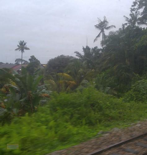 asia asean seasia malaysia malaysian malaypeninsula johor ktm railway tree rain canadagood 2018 thisdecade color colour cameraphone